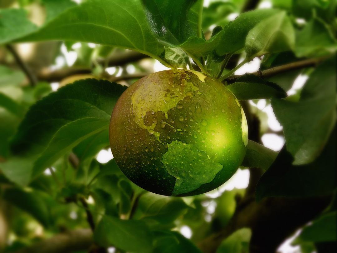 Cinco estratégias de sustentabilidade para uma grande transformação alimentar