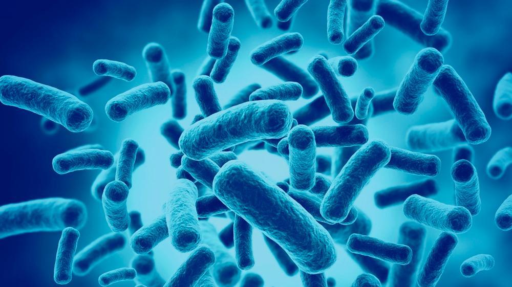 Anvisa publica Guia de Probióticos