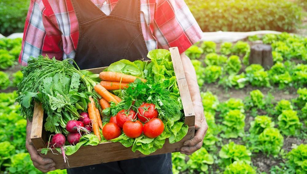 Orgânicos: um mercado a ser explorado