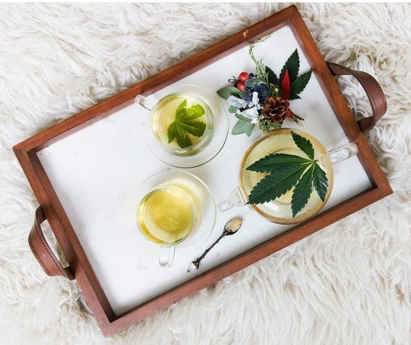 Cannabis, Cânhamo, maconha e CBD: estamos prontos pra essa conversa?