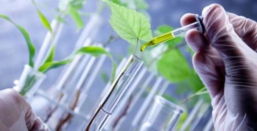 Alimentos e Suplementos para Imunidade: oportunidade ou oportunismo?