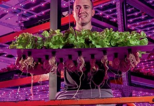 Pink Farms – Primeira Fazenda Vertical Urbana da América Latina firma parceria com o Grupo Carrefour