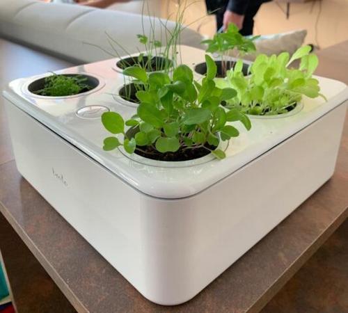 Startup de hortas compactas atrai público  e amplia operações no mercado